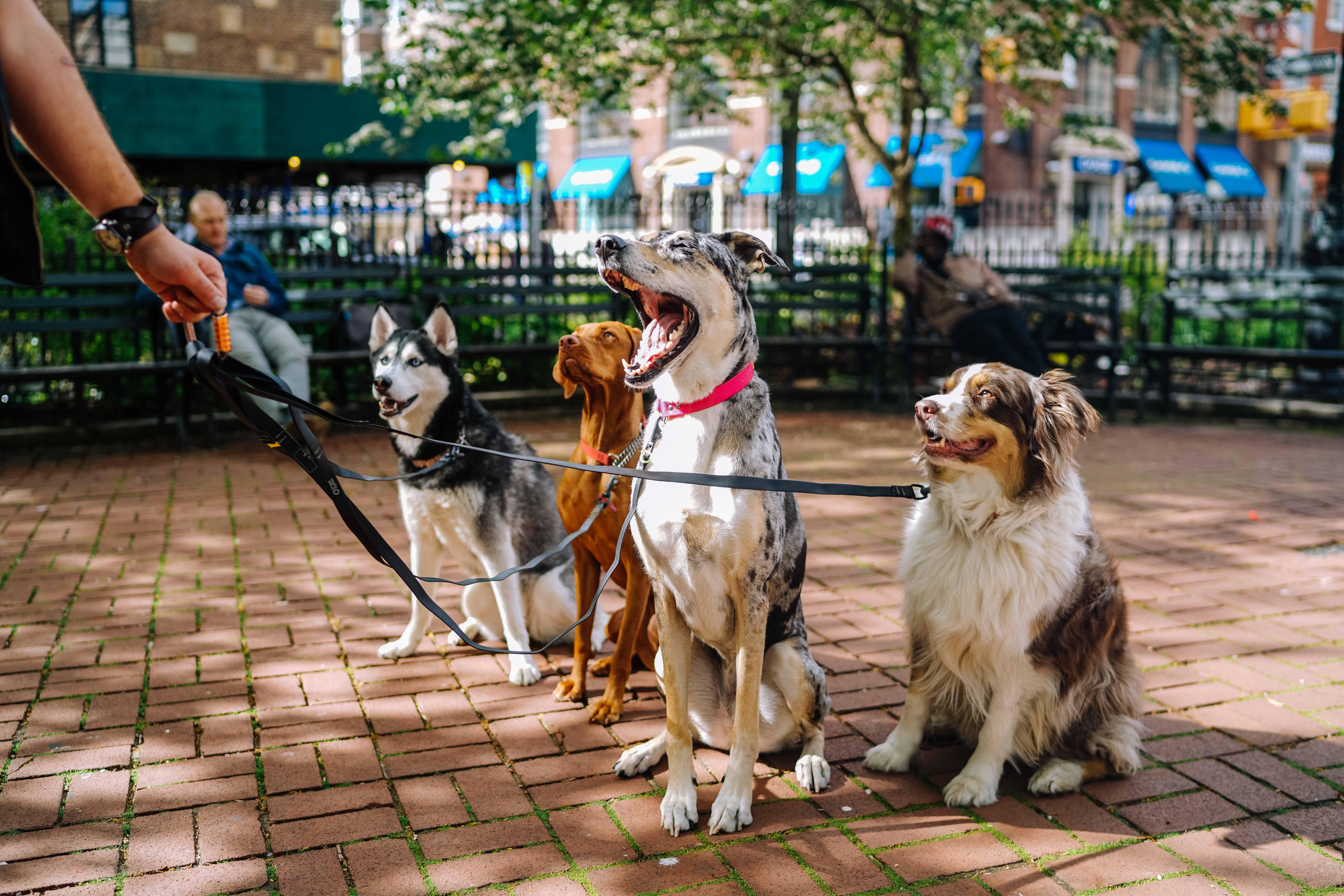 Top 7 Dog Parks In Kansas City